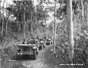 A convoy of American jeeps proceed along a trail through the jungle.